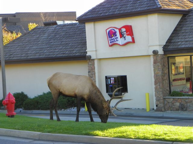 """NOW THAT THE """"TOURISTS""""ARE GONE I CAN USE THE DRIVE THROUGH AGAIN."""