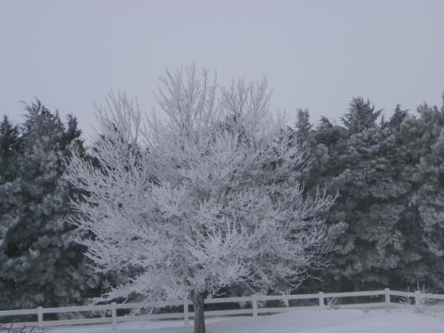 Nebraska Tree