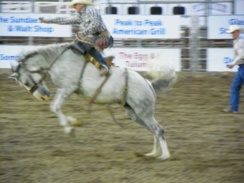 SADDLE BRONC RIDER AT ROOFTOP RODEO IN ESTES PARK COLORADO