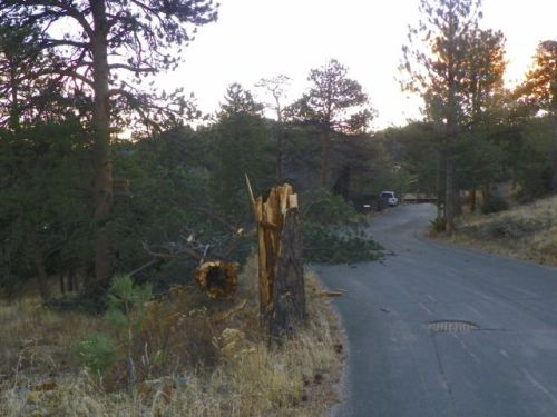 Tree falls to high winds in Estes Park, Colorado
